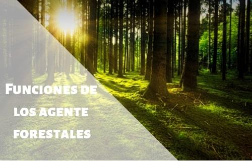 funciones de los agentes forestales