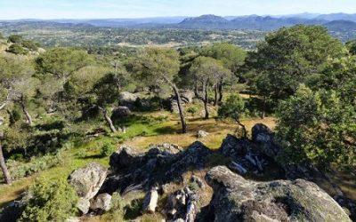 50 plazas convocadas a Agente Forestal de la CAM